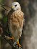 Hawk9716