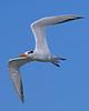 Tern Royal 8220