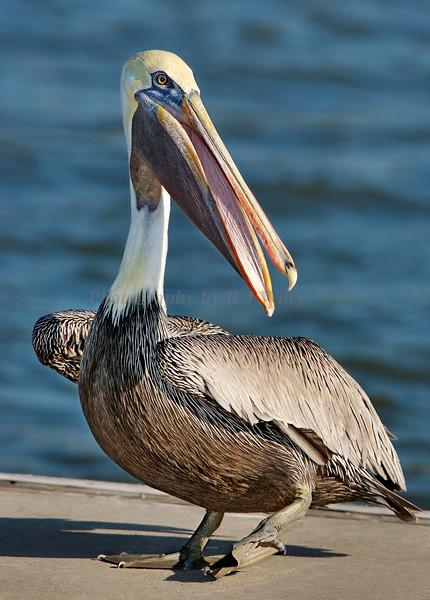 Pelican 1308