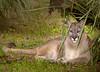Panther Florida 4790 RJWiley