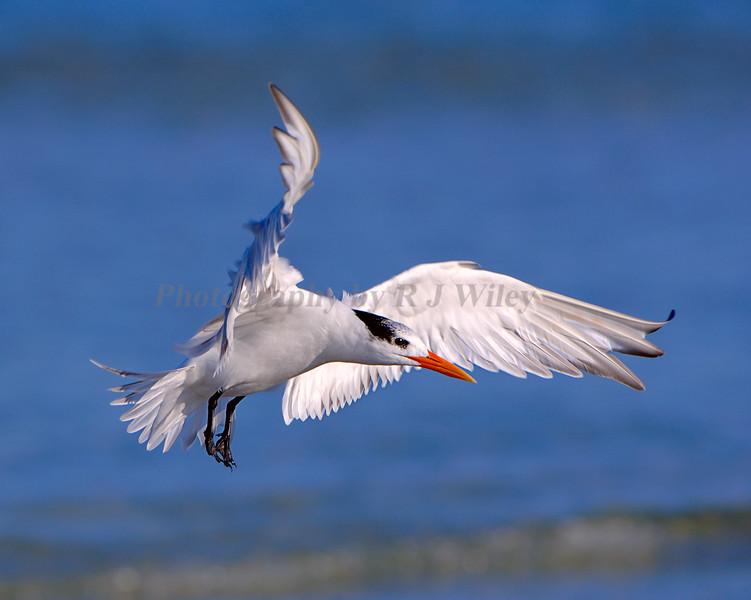 Tern Royal 7987