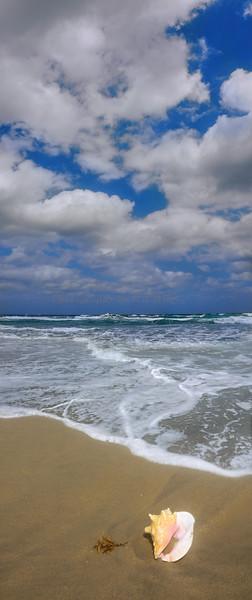 Shell on beach 2570