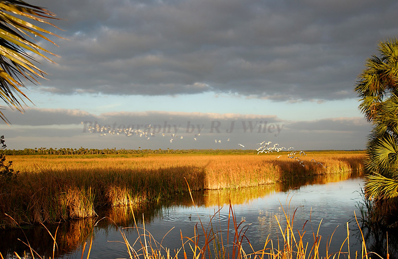 Everglades 0739