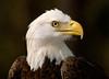 Eagle 9701