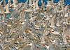 Royal Terns 844