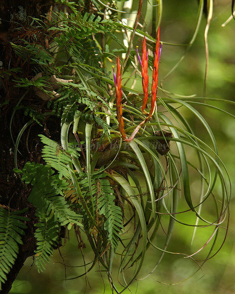 Airplant 3547
