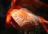 Flamingo 1744
