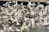 Royal Terns 845