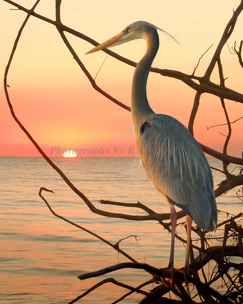 Sunset 858 c