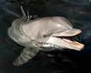 Dolphin 9274