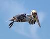 Pelican 505