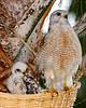 Hawk 1765