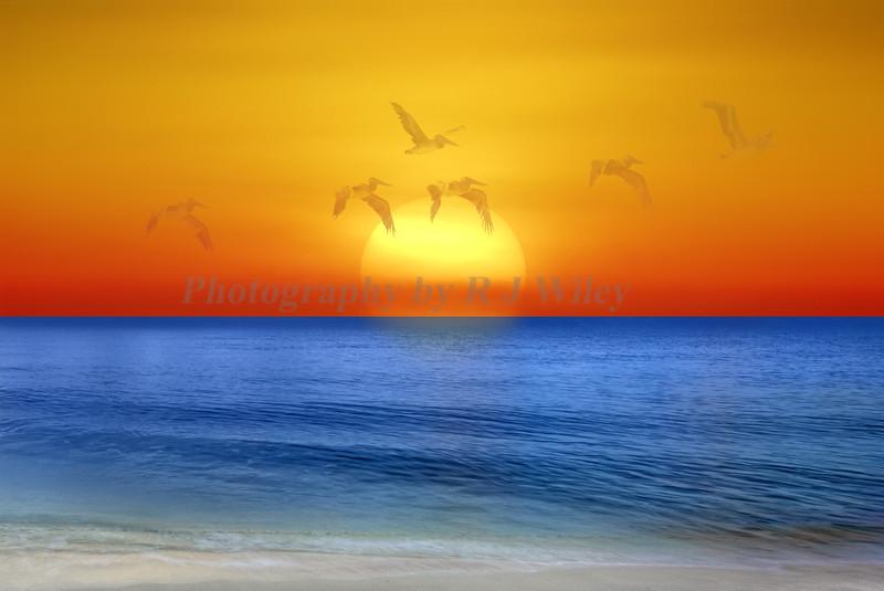 Pelican sunset a