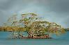 Mangroves 390