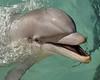 Dolphin 9237