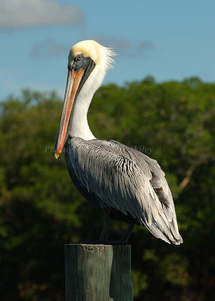 Pelican 5725