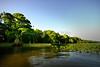 Cypress trees Lake Istokpoga 1839