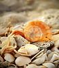 Shells 6985