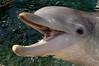 Dolphin 8466