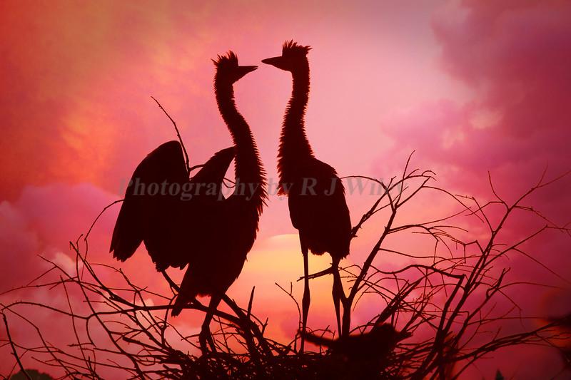 Wacodahatchee Sunset 353 dm
