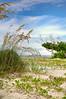 Beach 3157RJWiley