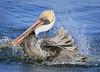 Pelican 8973