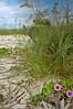 Beach 3148RJWiley