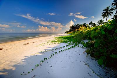 Beach 4156 a