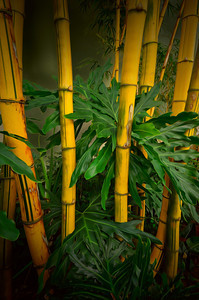 Bamboo 3218 a