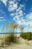 Beach 669 a