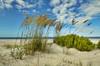 Beach 684 a