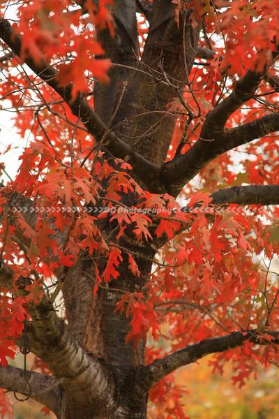 Fall Shots