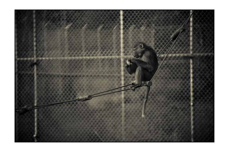 Plight of Caged Animals_result