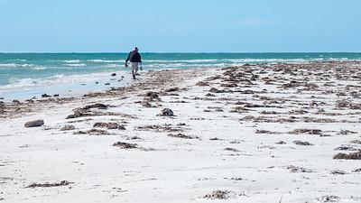Anclote Key Beach Comber. Tarpon Springs, FL .