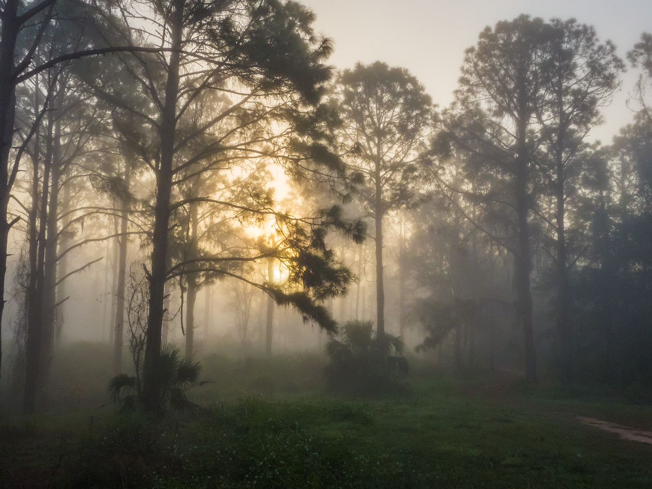 Sabal Bluff Reserve. Leesburg, FL