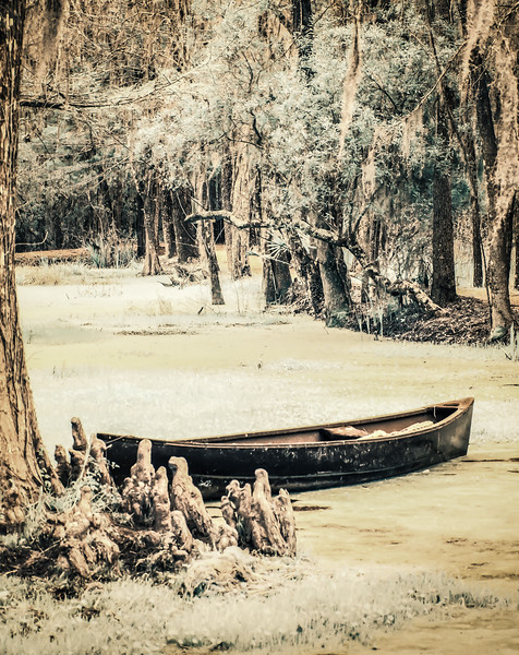 Audubon Swamp at The Magnolia Plantation. Infrared