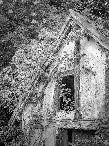 Giverny (Infrared to Black and White)