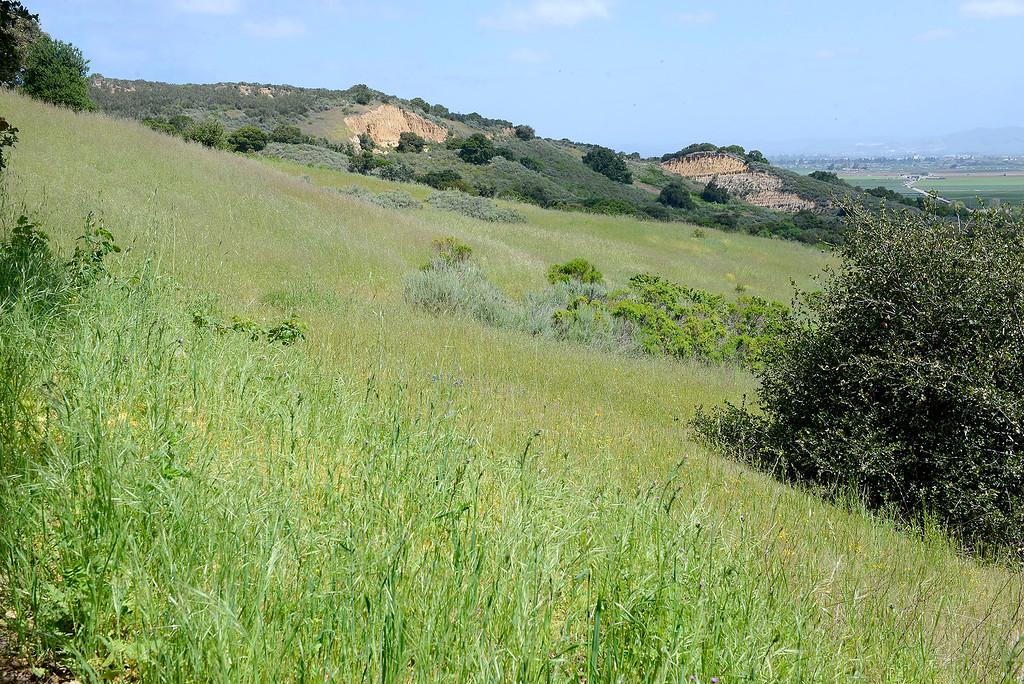 . Wildflowers in bloom in the Laguna Seca Recreational Area on Wednesday, May 2, 2018.  (Vern Fisher - Monterey Herald)