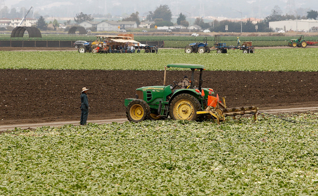 . Busy agricultural field work in Castrovile on Tuesday, September 4, 2018.  (Vern Fisher - Monterey Herald)