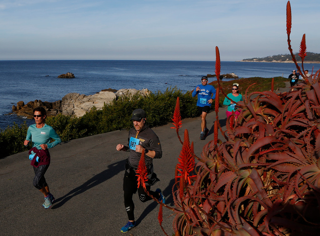 . Runners pass blooming succulents as they make their way along Scenic Road during the Rio Grille Resolution Run in Carmel on Monday January 1, 2018. (David Royal/Herald Correspondent)