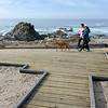 Pacific Grove foot trail