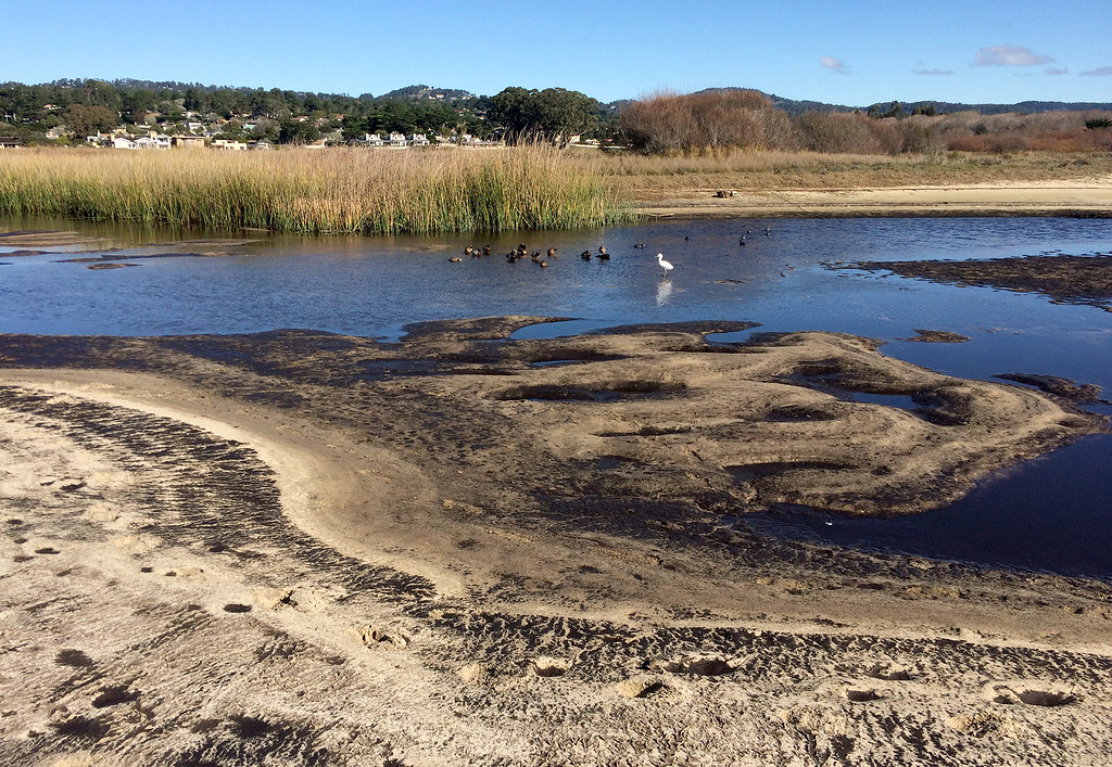 . Low water at the Carmel River estuary has revealed a large amount of ash from the Soberanes Fire at Carmel River State Beach on Thursday, Jan. 5, 2016.  (Vern Fisher - Monterey Herald)