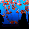 Live 360 degree video at the Aquarium