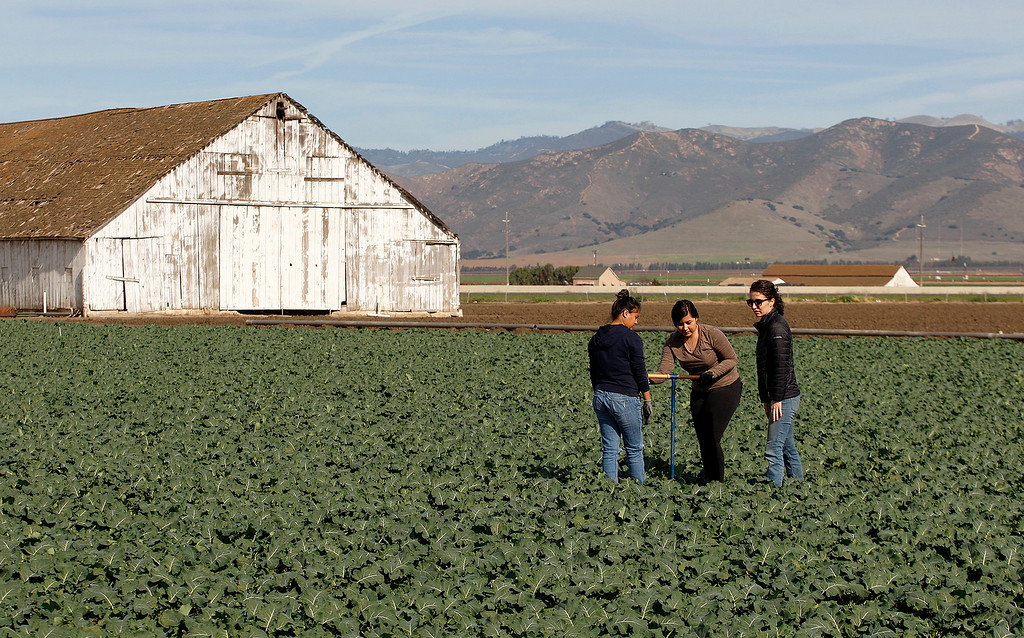 . Gonzales High School students Nayeli Garcia, 16 and Leslie Zepeda, 15, work with Pisoni Farms compliance manager Jazmin Lopez in a broccoli field in Gonzales as part of their school project that was placing sensors to monitor water levels in the soil on Friday, Feb. 2, 2018.  (Vern Fisher - Monterey Herald)