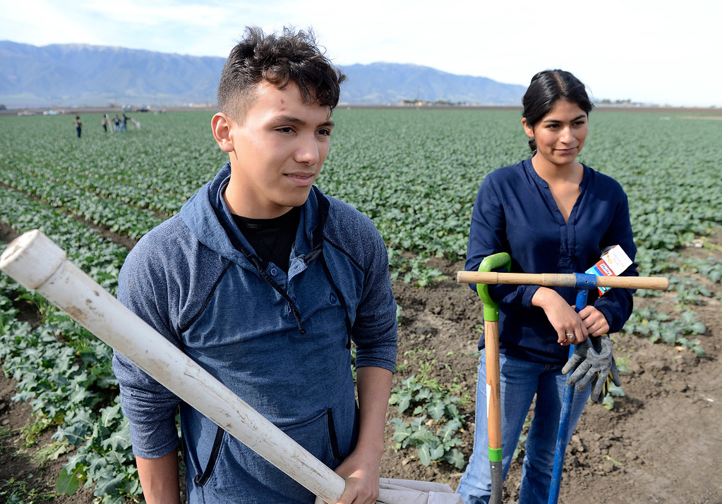 . Gonzales High School students Pablo Mendoza, 16, and Elizabeth Aireola, 15, work in a broccoli field at Pisoni Farms in Gonzales as part of their school project that was placing sensors to monitor water levels in the soil on Friday, Feb. 2, 2018.  (Vern Fisher - Monterey Herald)