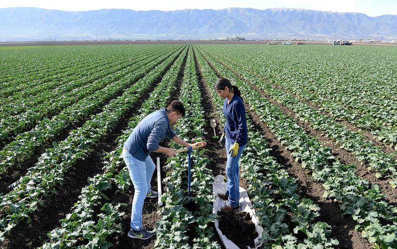 Gonzales High Farm Project