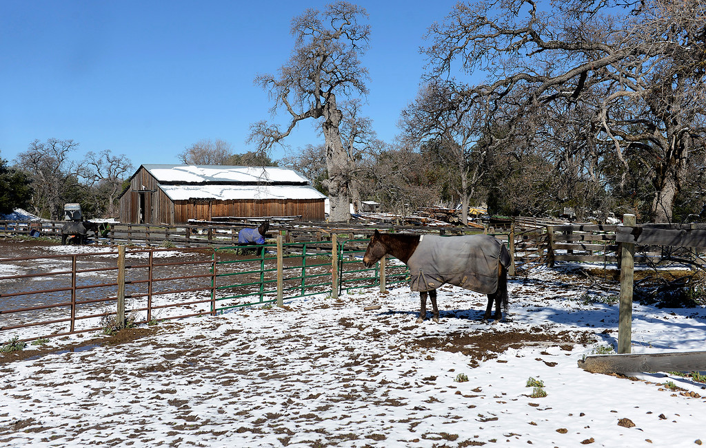 . A horse in a snow covered corral at the Nason Ranch on Tassajara Road in Carmel Valley on Tuesday, Feb. 27, 2018.  (Vern Fisher - Monterey Herald)