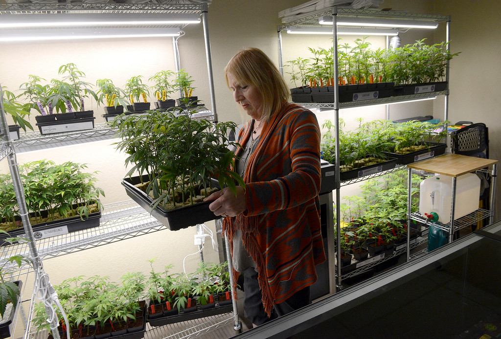 . Owner Lonna Blodgett inside the Clone and Cannabis Genetics Room at Emerald Skyway in Salinas on Wednesday, Feb. 28, 2018.  It\'s the first marijuana dispensary to open in Salinas and has been open since mid January.  (Vern Fisher - Monterey Herald)