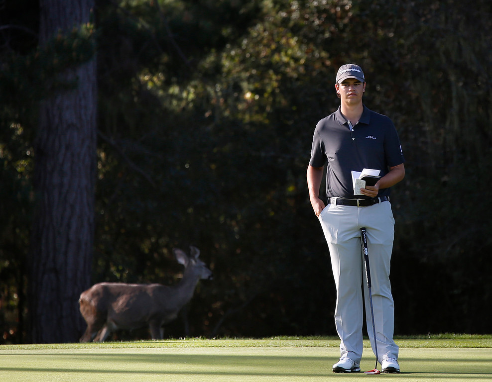 . A deer walks behind Beau Hossler as he lines up his putt on the second green at Monterey Peninsula Country Club during the third round of the AT&T Pebble Beach Pro-Am in Pebble Beach, Calif. on Saturday February 10, 2018. (David Royal/Herald Correspondent)