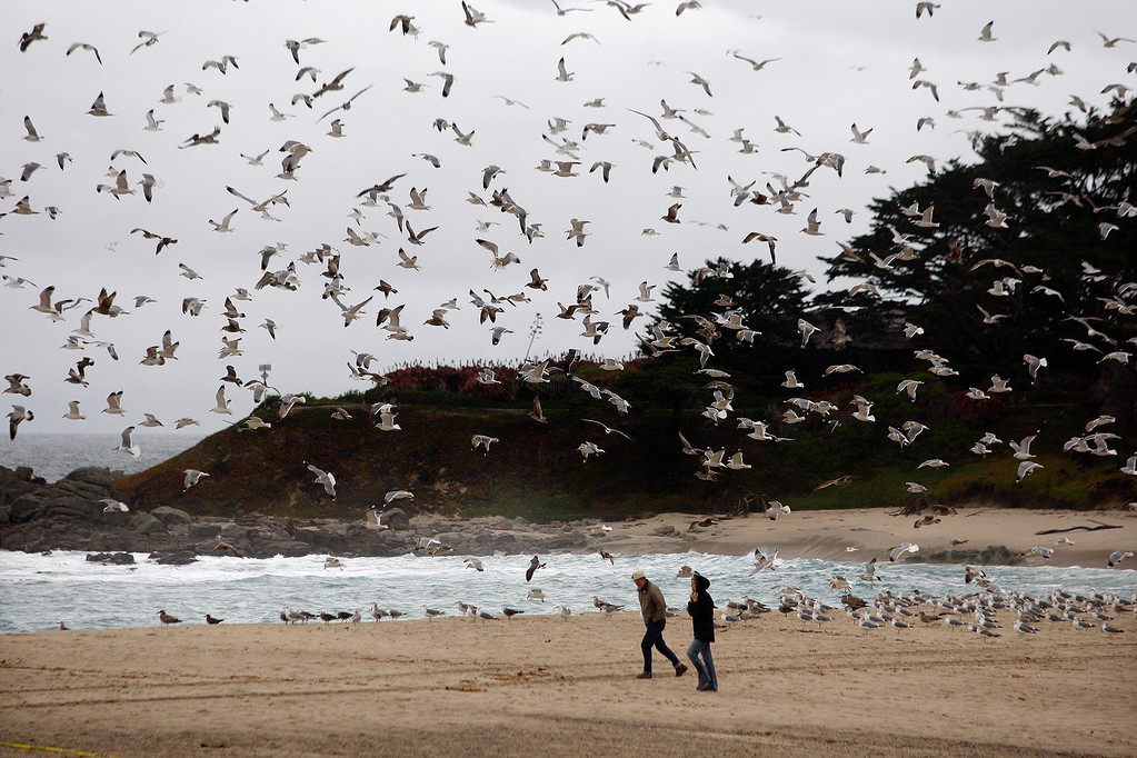 . Two people walk on Carmel River State Beach as gulls and pelicans take flight overhead on Tuesday, Jan. 9, 2018.  (Vern Fisher - Monterey Herald)